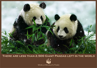 WWF Campaign Card Handout Design ©2011 Allison Holden