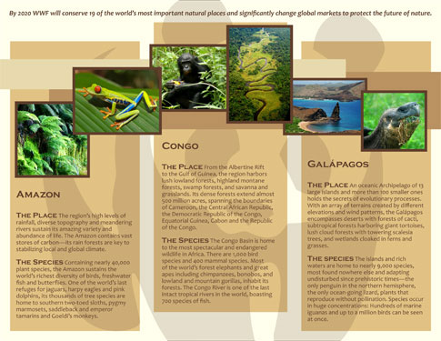 WWF Campaign Brochure Design ©2011 Allison Holden